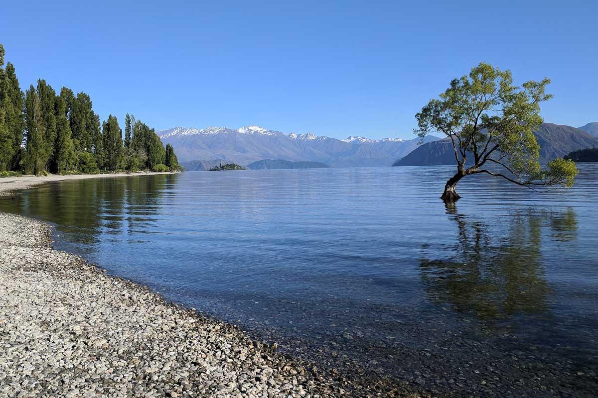 l'arbre solitaire sur le lac de wanaka ile du sud nouvelle zelande