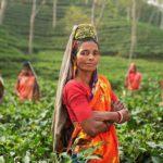 Patrimoine mondial en Inde : les plus beaux sites à voir