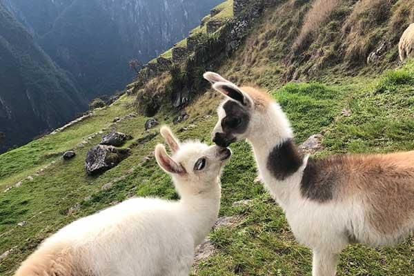 voyage de noce au Pérou
