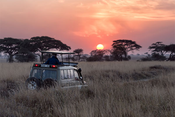 Voyage de noces kenya