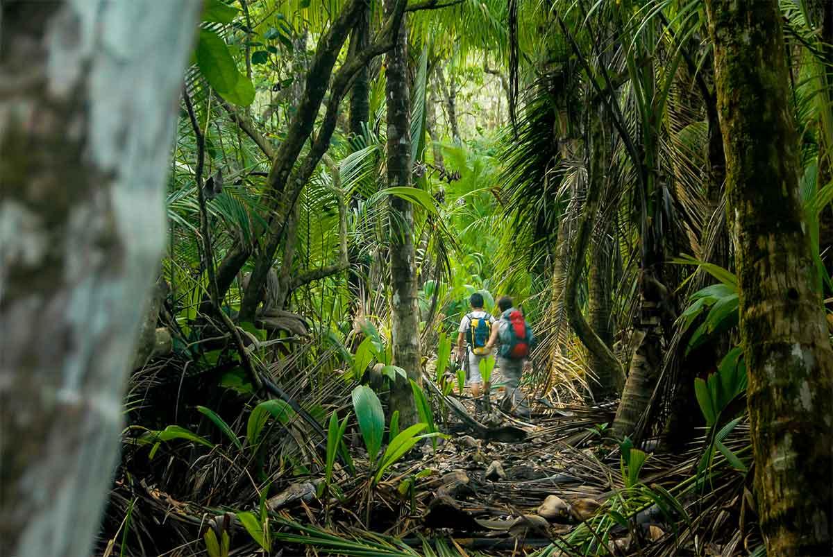 2 randonneurs -foret tropicale de corcovado - costa rica