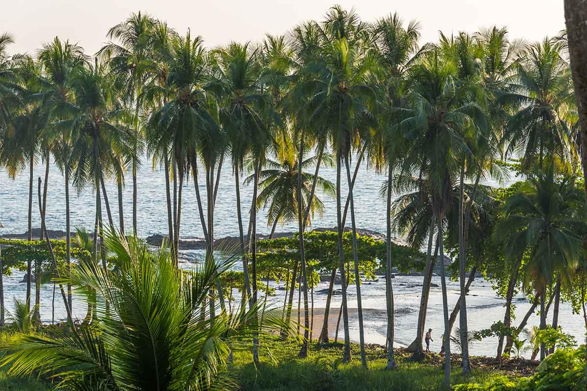 Palmiers sur la plage