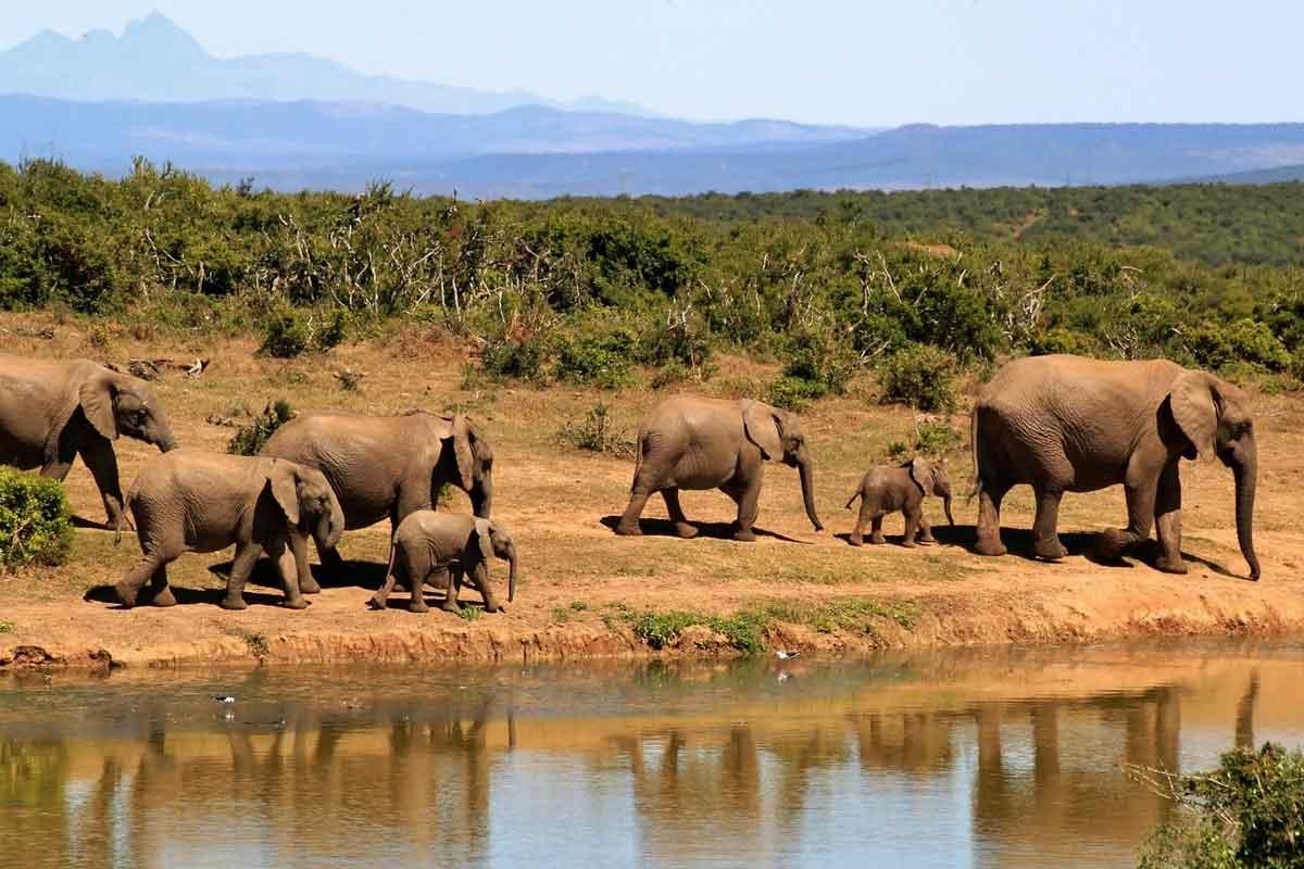 éléphants afrique du sud point d'eau