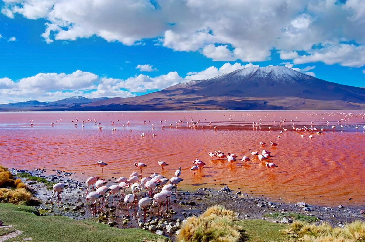 laguna colorada en Bolivie