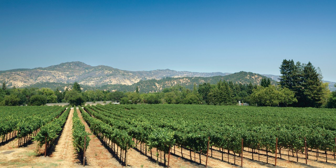 Dia3 : Napa Valley, Yountville